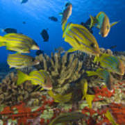 Reef Scene Print by Dave Fleetham - Printscapes