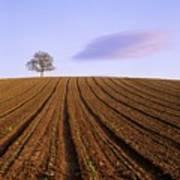 Remote Tree In A Ploughed Field Print by Bernard Jaubert