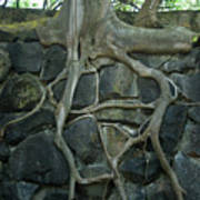 Roots And Rocks Print by Douglas Barnett