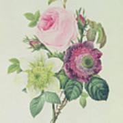 Rose Print by Pierre Joseph Redoute
