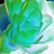 Rose Sea Print by Lynne Furrer