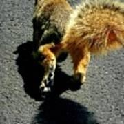 Runaway Fox Squirrel Print by Beth Akerman