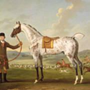Scipio - Colonel Roche's Spotted Hunter Print by Thomas Spencer