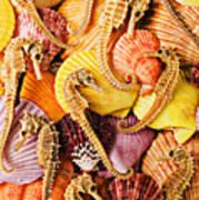 Sea Horses And Sea Shells Print by Garry Gay