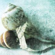 Sea Shells IIi Teal Blue Print by Ann Powell