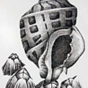 Seashell And Barnacles Print by James Williamson