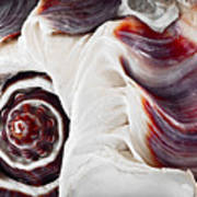 Seashell Detail Print by Elena Elisseeva