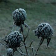 Shadowy Frozen Pods From The Darkside Print by Douglas Barnett