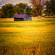 Shed In Sunlight Print by Marilyn Hunt