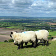 Sheep At Westbury Tor Print by Kurt Van Wagner