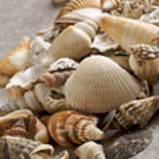 Shellfish Shells Print by Bernard Jaubert