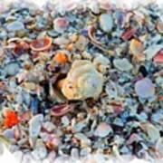 Shells Print by Judy  Waller