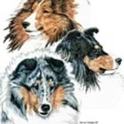 Shetland Sheepdogs Print by Kathleen Sepulveda