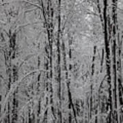 Silence Of Winter Print by Gabriela Insuratelu