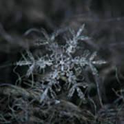 Snowflake 2 Of 19 March 2013 Print by Alexey Kljatov