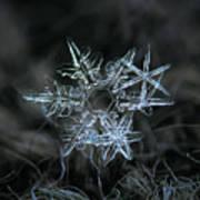 Snowflake Of 19 March 2013 Print by Alexey Kljatov