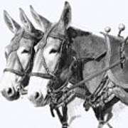 Sorrel Mule Team Print by Bethany Caskey
