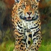 South American Jaguar Print by David Stribbling