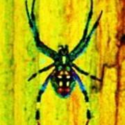 Spider Print by Daniele Smith