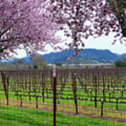 Spring Blossoms Near Calistoga Print by Charlene Mitchell