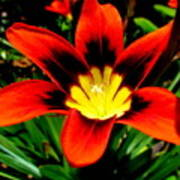 Spring Flower Print by Joyce Woodhouse