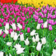 Spring Tulips Flower Field II Print by Artecco Fine Art Photography