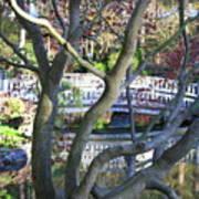 Springtime Bridge Through Japanese Maple Tree Print by Carol Groenen