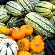 Squash Harvest Print by Will Borden