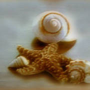 Star And Shells Print by Linda Sannuti