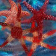 Starfish Print by Jack Zulli
