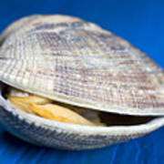 Steamed Clam Print by Frank Tschakert