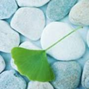 Stones And A Gingko Leaf Print by Priska Wettstein