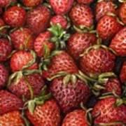 Strawberries -2 Contemporary Oil Painting Print by Natalja Picugina