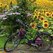 Summer Cycling Print by Debra and Dave Vanderlaan