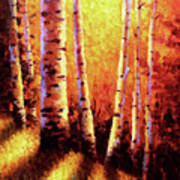 Sunlight Through The Aspens Print by David G Paul