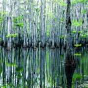 Swamp In Louisiana Print by Ester  Rogers