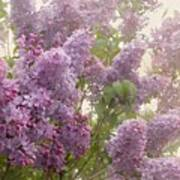 Swimming In A Sea Of Lilacs Print by Cindy Garber Iverson