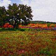 Texas Wildflowers Print by Tamyra Ayles