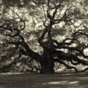 The Angel Oak Print by Susanne Van Hulst