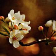The Fleeting Sweetness Of Spring Print by Lois Bryan