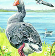 The Goose  Print by Antony Galbraith