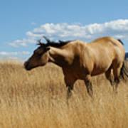 The Horse Print by Ernie Echols