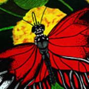 The Monarch Print by Ramneek Narang