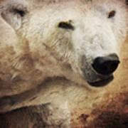 The Polar Bear Print by Angela Doelling AD DESIGN Photo and PhotoArt