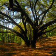 The Sacred Oak Print by David Lee Thompson