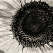 The Sunflower Print by Michael Wade