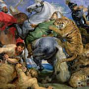 The Tiger Hunt Print by Rubens