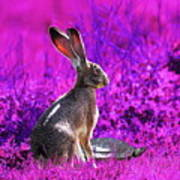 The Tortoise And The Hare . Magenta Square Print by Wingsdomain Art and Photography