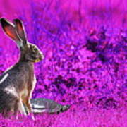 The Tortoise And The Hare . Magenta Print by Wingsdomain Art and Photography