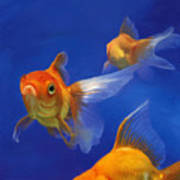 Three Goldfish Print by Simon Sturge